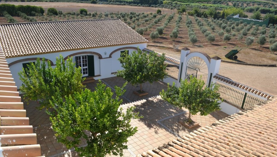 patio with lemon trees