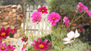 Mature and colourful flower gardens are a special feature of this property