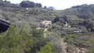 The finca set in the olive grove