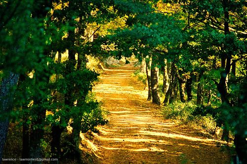 El blog de maria - Madrid forest ...