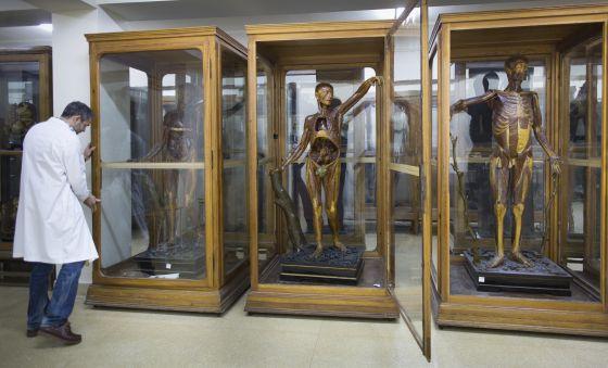 Museum Of Anatomy Madrid